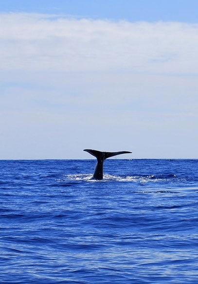 Girl diving in blue ocean